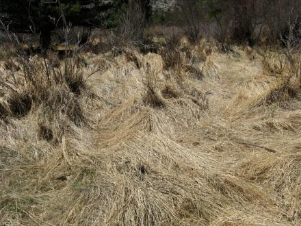 GrassStacks