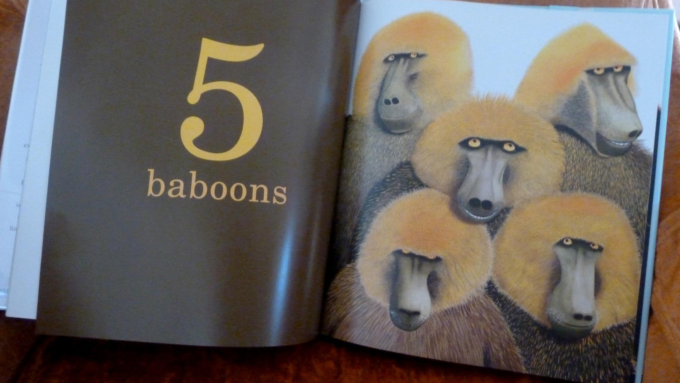 5baboons